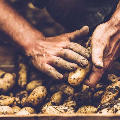 Keoghs. potatoes being cleaned
