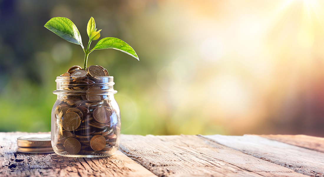 Plant Growing In Coin Savings in a jar