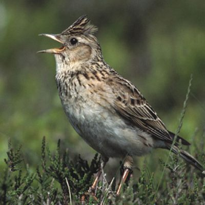 biodiversity-bird