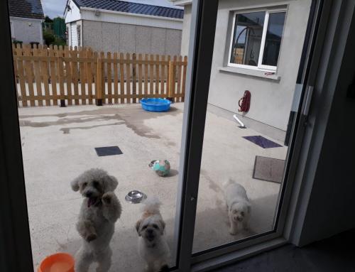 Success Story – The Dog Lodge & Lounge Lusk